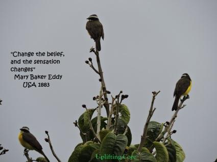 Change belief MBE.jpg